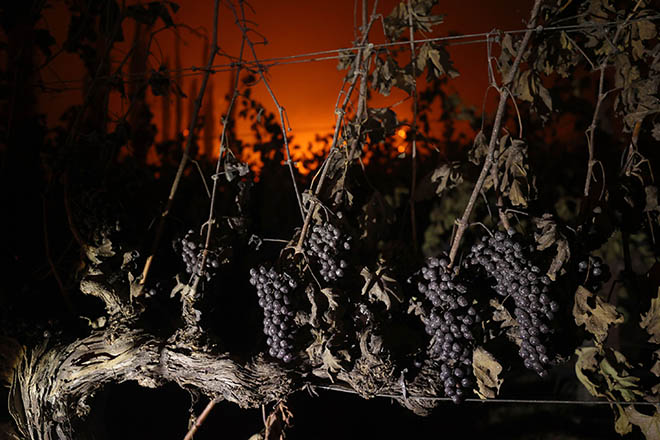 Smoke Gets in Your…Vines
